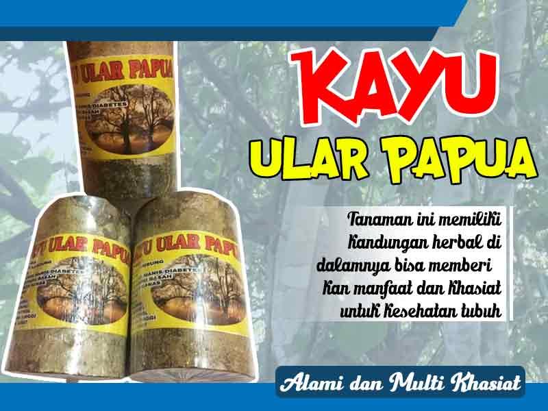 Khasiat- Kayu-Ular-Papua